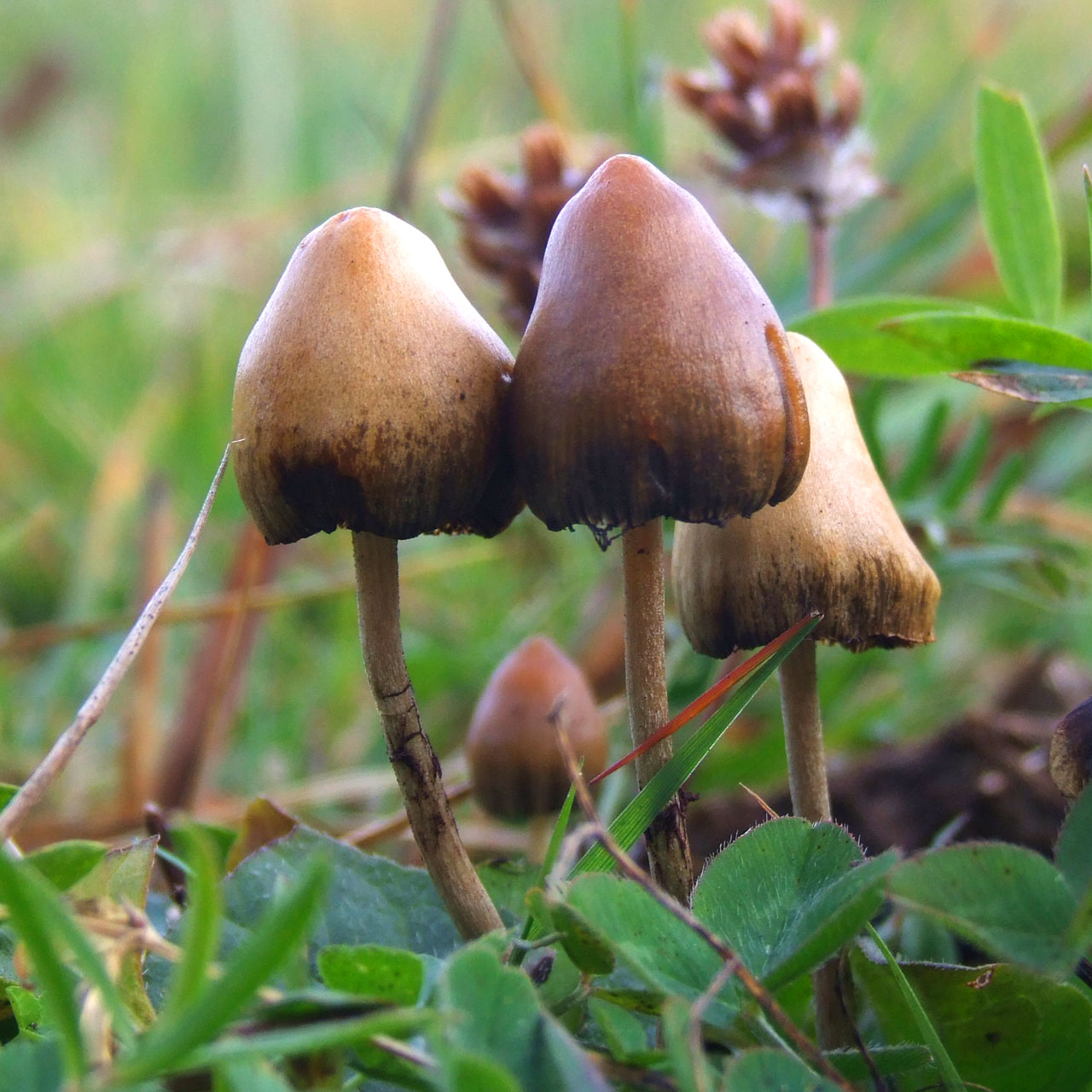 New evidence explains how magic mushrooms could treat depression